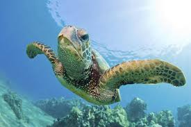 photo flying turtle up