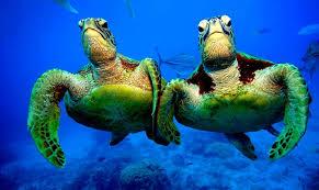 photo turtle team